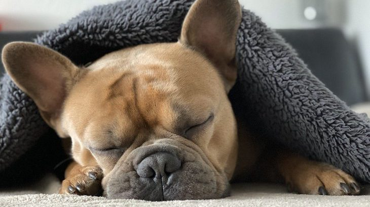 【こだわり】ヒポポタマスの枕が届ける3つの快適さ【極上の寝心地】